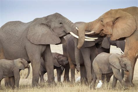 how can an elephant get elephants get the point of pointing study shows the new york times