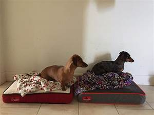 best chew proof dog beds reviewed dog bed zone dog beds With best dog bed for dogs that chew
