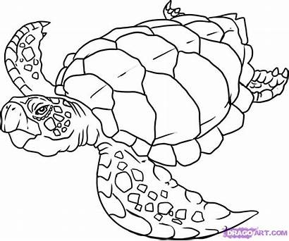 Turtle Coloring Sea Pages Turtles Printable Animals