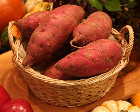 Types Of Sweet Potatoes  North Carolina Sweet Potatoes