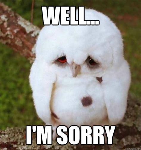 Funny Sorry Memes - sorry you can t sleep sad owl is sad for you no sleep heres sad owl quickmeme