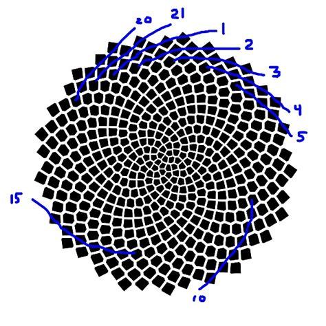 fibonacci numbers  sunflower seed spirals national