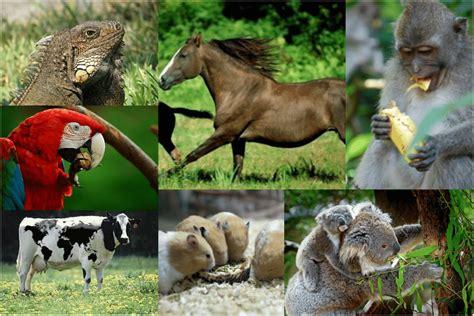 caracteristicas  ejemplos de animales herbivoros