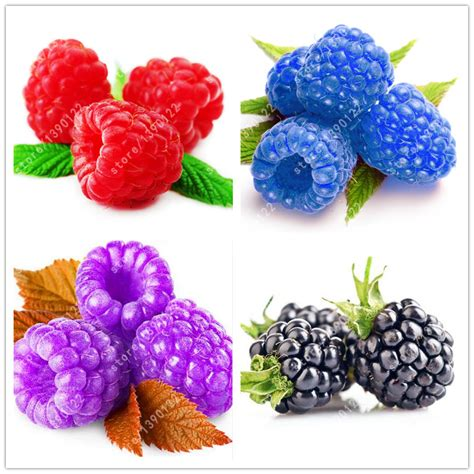 blue raspberry online buy wholesale blue raspberry from china blue