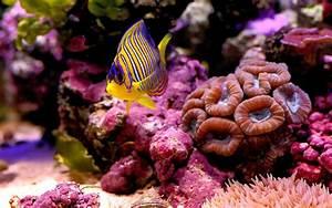 Colorful Coral Reef Wallpaper - WallpaperSafari