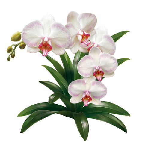 unkraut garten bilder compo orchideen
