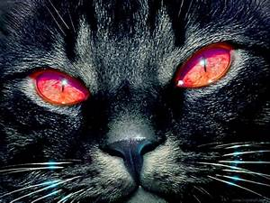 Black cats with colored eyes | Barbaras Fantasy World