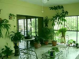 Zimmerpflanzen Feng Shui : feng shui und zimmerpflanzen ~ Indierocktalk.com Haus und Dekorationen