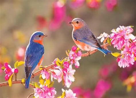 table canape fleurs les oiseaux la promesse de la branche le printemps