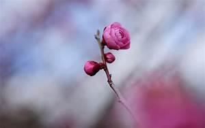 Elegant Rose wallpaper