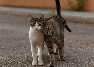 Impariamo a capire il nostro gatto… Il linguaggio del