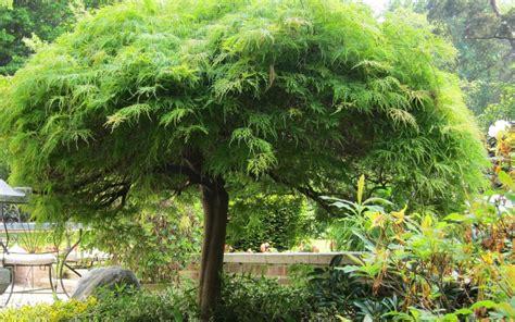 Arbre, Conseils De Plantation  La Terre Est Un Jardin