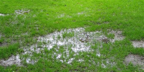 grass seed lawn repair mild winter grass and soggy lawns lawntech