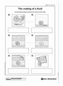 11 Best Images Of Fossils Activities Worksheets Fossil