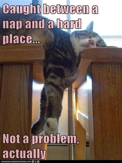 Nap Meme - funny animal pictures 54 pics