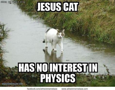 Jesus Cat Meme - meme cats pets cute and docile