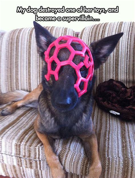 dog destroyed    toys    super