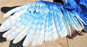 Wing of an Ice Phoenix by mooki003 on DeviantArt
