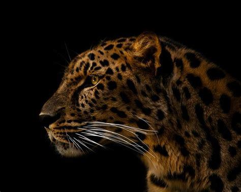 1000+ Images About National Geographic  Animal Kingdom