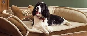 perros, para, pisos, , razas, ideales, y, perfectas