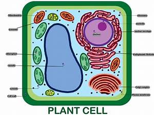 How Are Vacuoles And Vesicles Similar And Different