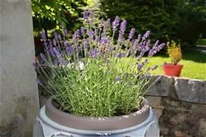 Plantes En Pot Pour Terrasse : plantes pour jardini res peu gourmandes en arrosage ~ Dailycaller-alerts.com Idées de Décoration