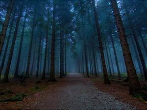 wallpapers: Twilight Forest