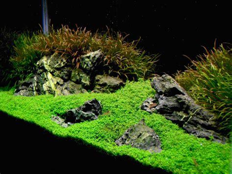 How To Create Aquascape With Iwagumi Style Aquascaper