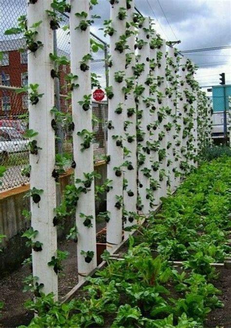 Vertical Garden Pipe by Diy Vertical Pvc Planter Home Design Garden