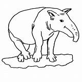 Coloring Anteater Hormiguero Colorear Oso Tamanoir Coloriage Dibujos Ohbq Gigante Dibujo Coloriages Printable Imagenes Adults Panthere Rose sketch template