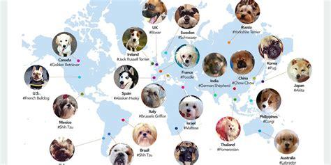 bred si鑒e social le 13 razze di cani più amate al mondo treedom