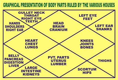 Ruled Astrology Parts Body