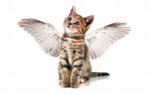 Weißer Wurm Katze : bilder von tiere katzenjunges katze fl gel engeln lustige 1280x800 ~ Markanthonyermac.com Haus und Dekorationen