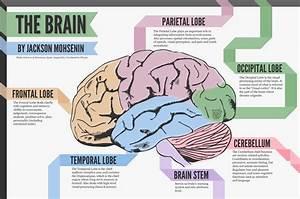 Mental Health And Misdiagnosis  A Neuroanatomy Guide