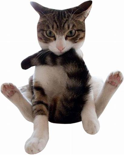 Funny Cat Cats Chat Clip Transparent Se