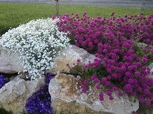 Plantes Vivaces Pour Massif : plante de rocaille sc ne de jardin une rocaille de ~ Premium-room.com Idées de Décoration