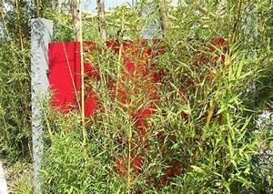 Sichtschutz Bambus Pflanze : kleiner bambusgarten pergola bester sichtschutz im reihenhausgarten ~ Sanjose-hotels-ca.com Haus und Dekorationen