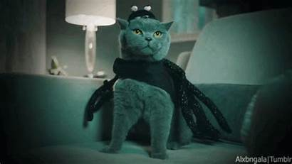 Halloween Cat Russian Costume Spider Cats Celebrate