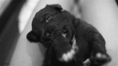 Gifs Puppies Dogs Bite Giphy Puppy Animals