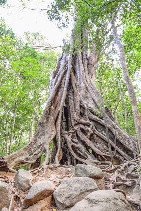 ritigala forest      sri lanka