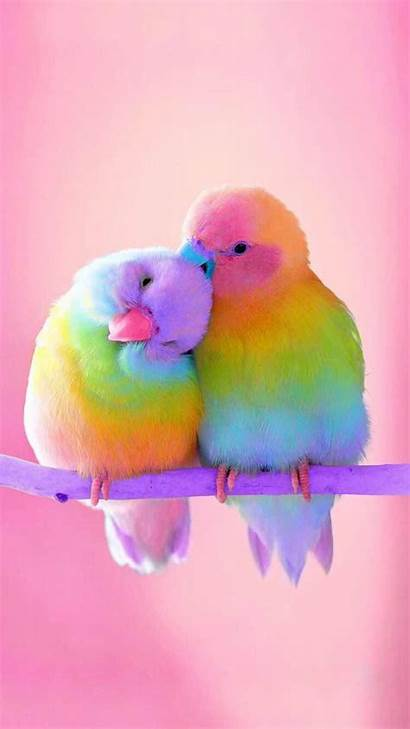 Iphone Birds Bird Wallpaperaccess Colorful Wallpapers