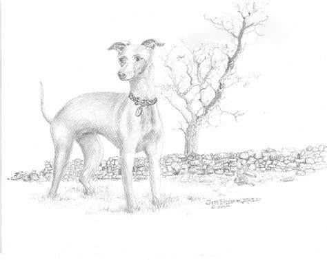 foto de Italian Greyhound Drawing by Jim Hubbard