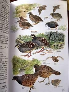 Birding Taiwan  The New Taiwan Bird Field Guide