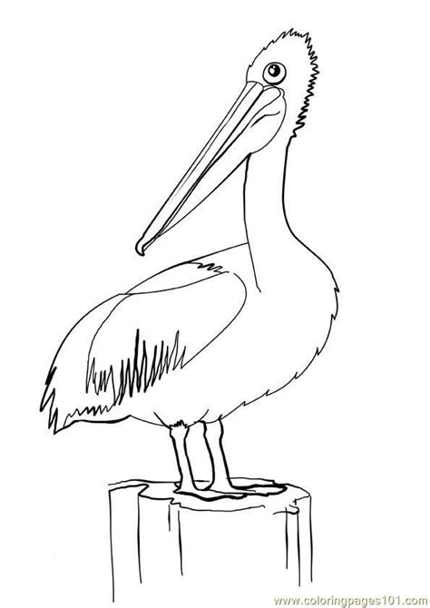 pelican coloring page  kids  pelican printable coloring pages   kids
