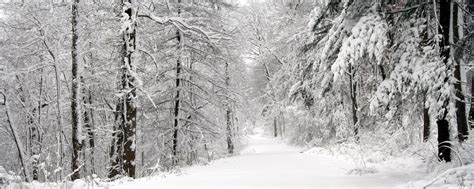 Free Winter Picture by Winter Screen Backgrounds Wallpaper Cave
