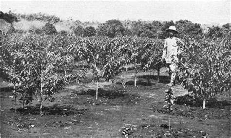 The History Of Coffee In Vietnam