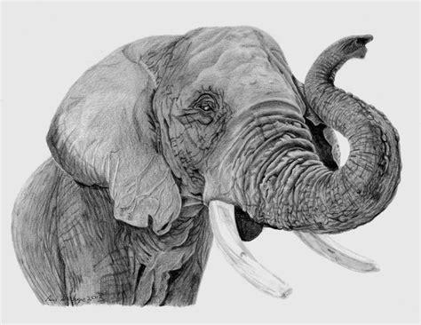 hd animal drawing wallpaper wallpapersafari
