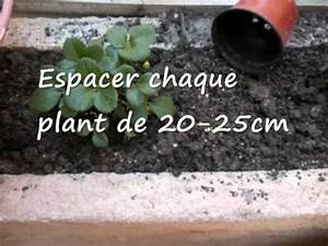 Faire Pousser Des Fraises : faire pousser des fraises sur son balcon youtube ~ Melissatoandfro.com Idées de Décoration