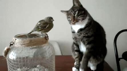 nicht die typische katze lustige bilder sprueche witze