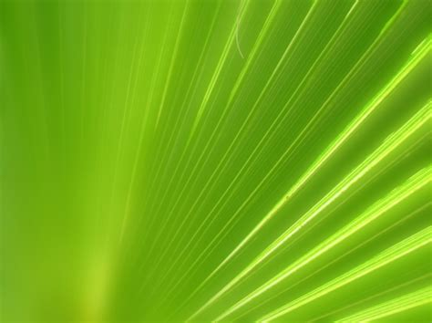 green and white lights free ppt backgrounds for your
